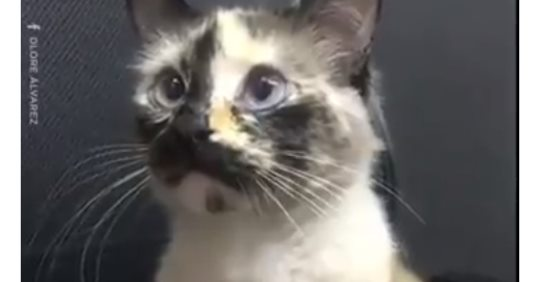 Видео: домашний кот спас жизнь ребенка