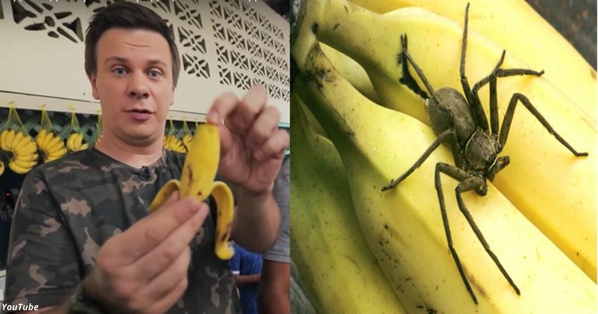 «Бразильский банан может стать последним в жизни»: Комаров предупредил украинцев