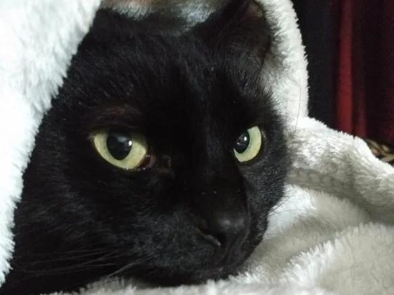 Когда кошка разбудила меня ночью, то я даже не мог себе представить чем это закончится…