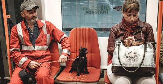 12 развесёлых котов и собак, которые ведут себя очень странно и явно не подозревают об этом