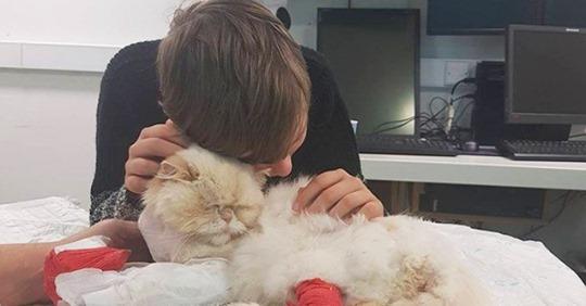 Котик был в плохом состоянии, но увидев слезы ребенка, сразу приполз к нему, чтобы успокоить…Верность!