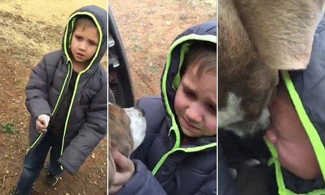 После долгих отчаянных поисков верный друг мальчика все-таки нашелся. Мама засняла их встречу