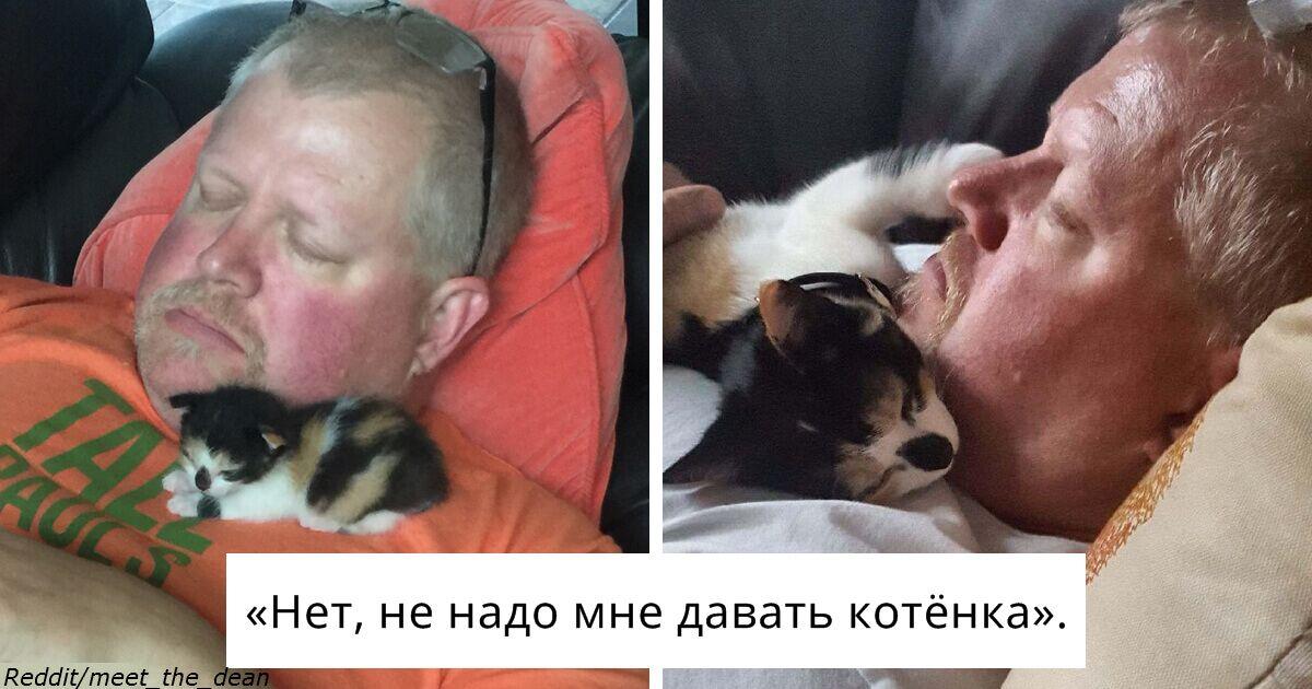 Мужчины, которые говорили, что не хотят никаких чертовых котов