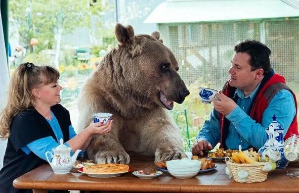 23 года назад пара из России «усыновила» маленького медвежонка, который теперь вырос и помогает им во всем по хозяйству…