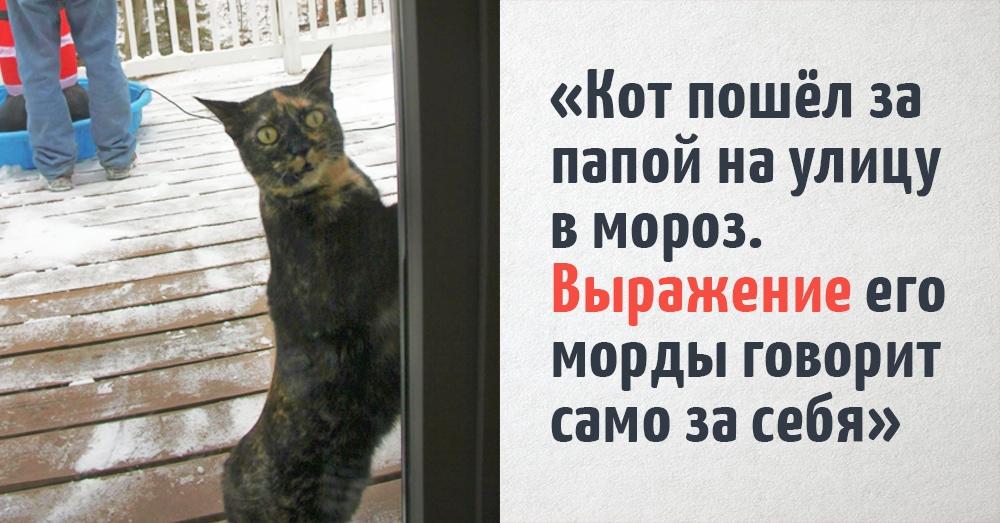 Пользователи интернета делятся фотографиями своих котиков, которые слишком забавны, чтобы скрывать их от человечества. Ну это же котики!