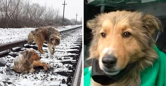 Собачья верность: бездомный пес, рискуя жизнью, защищал свою подругу