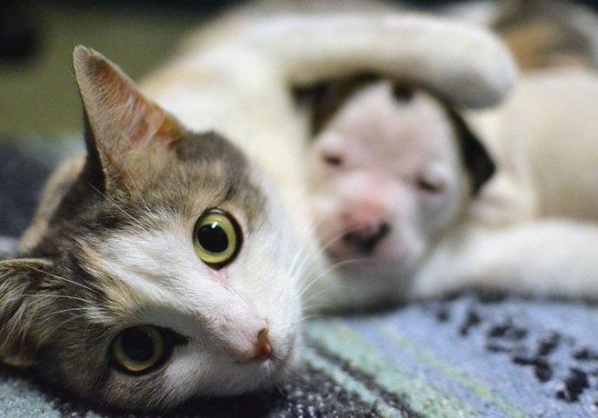Кошка притащила с прогулки щенка и решила песика усыновить