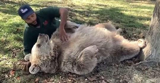 Медведица узнала человека, который заботился о ней, пока она была маленькой.