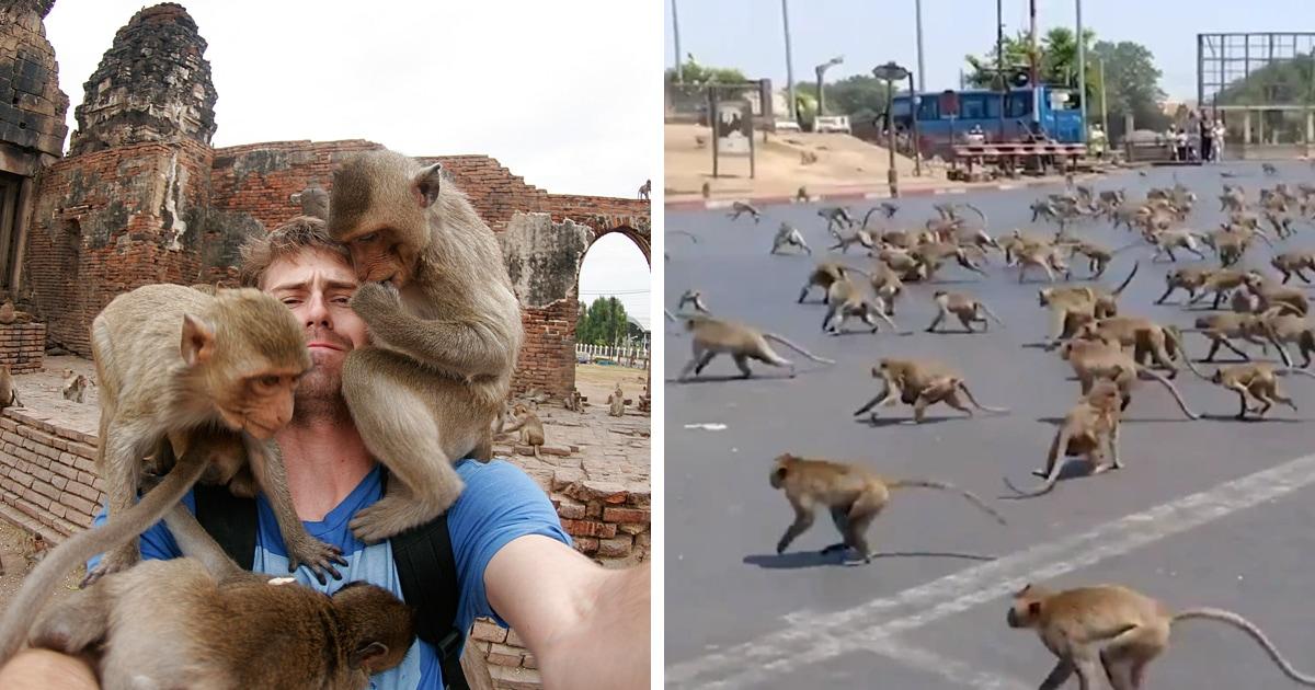 Сотни голодных обезьян выбежали на улицы города в Таиланде. Всему виной туристы и коронавирус