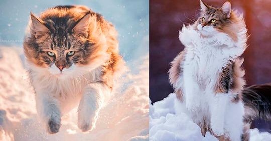 Шикарный сибирский котик покорил Сеть