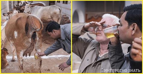 «От коровьей мочи до чеснока»: чем в мире спасаются от коронавируса