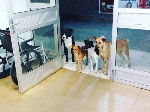 Бездомного положили в больницу, а его 4 собаки терпеливо ждали его у двери