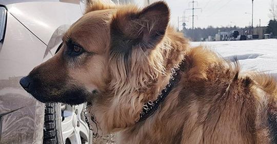Хозяин высадил собаку из машины и уехал. Она бежала за авто даже не понимая, что ее предали
