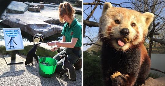 Сотрудницы зоопарка самоизолировались у себя на работе — и теперь живут в окружении 1200 птиц и животных