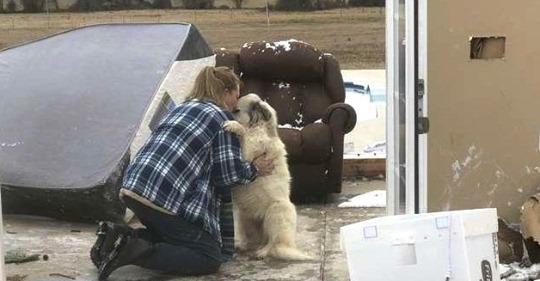 Трогательная встреча собаки со своими хозяевами, которые вынуждены были расстаться из за торнадо