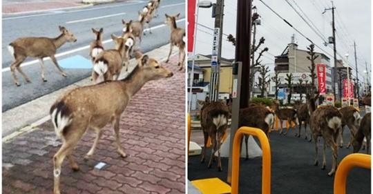 Во время карантина животные словно ожили и стали приходить в города