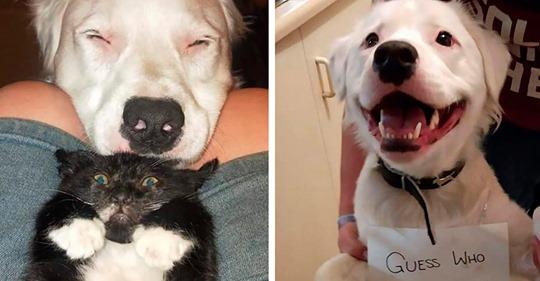 Слепая и глухая собака с огромным удовольствием заботится о других животных