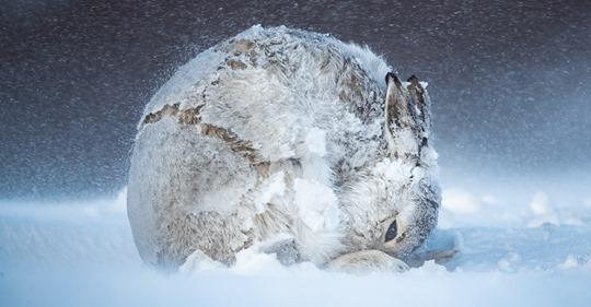 Конкурс фотографии дикой природы объявил победителя 2020 года и показал работы финалистов