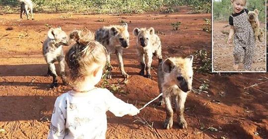 Как 2-летняя малышка подружилась с дикими гиенами