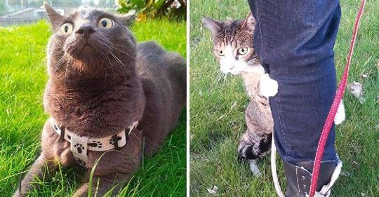 Коты, которые впервые вышли на улицу