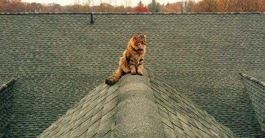 Куда улетают коты?