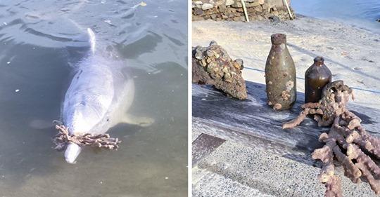 Дельфин из Австралии соскучился по людям, и когда те вернулись, начал подносить им дары со дна океана
