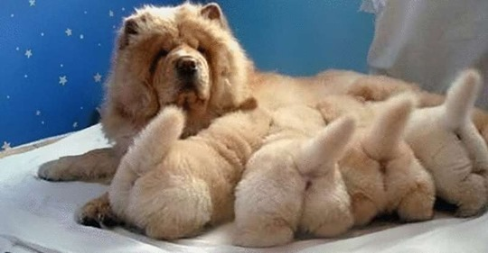15 фото трогательных мам-героинь! Они так гордятся своими детками :)