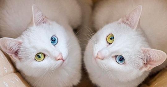 Парень не смог разлучить двух кошечек-сестричек и теперь они стали звездами интернета