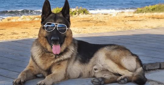 Пес унаследовал 80 млн долларов и опекуны приобрели для него дом в Майами