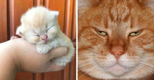 Топ 10 фотографий, которые доказывают, что коты растут ну очень быстро