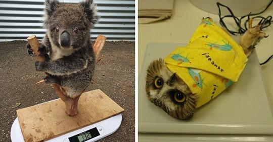 Топ-10 веселых фотографий, которые показывают, на какие уловки приходится идти, чтобы взвесить животных в зоопарке