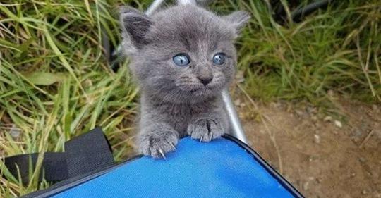 Бездомный котенок выбрал рыбака в качестве своего нового хозяина