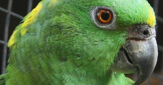 Заскучавший попугай думал, что остался дома один. Посмотрите, что сняла скрытая камера