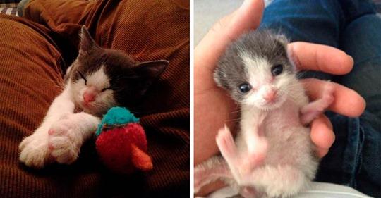 Мужчина приютил котёнка и за год они стали неразлучными друзьями