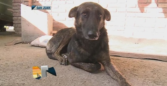 Собака преодолела 160 километров, чтобы найти людей, которые её когда-то спасли