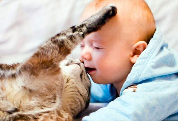 Несколько позитивных фотографий детей + животных.