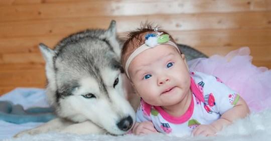 Девочка родилась и растет в стае хаски. Это удивительно!