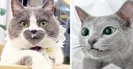 Замурчательные кошки, раскрашенные природой не по правилам