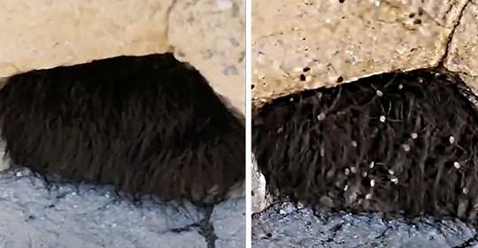 Турист нашел странную черную мохнатую штуку и потыкал в нее палкой