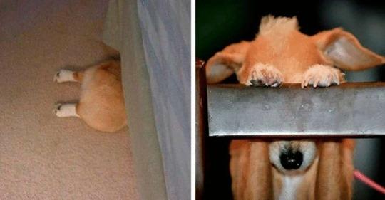 19 собак, которые думают, что хорошо спрятались