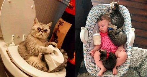 Топ 10 фотографий со смешными котиками от их веселых хозяев