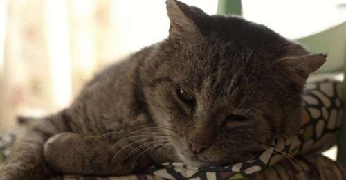 Кошачья старость — что нужно знать об уходе за стареющим животным.