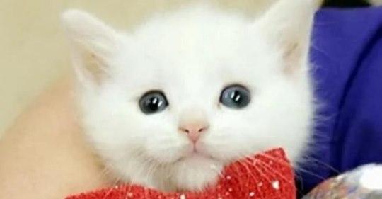 Хозяева бросили котенка со «странными» лапками, но он нашел новый дом