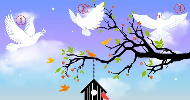 Тест: выбери своего голубя мира и получи прекрасное послание света!