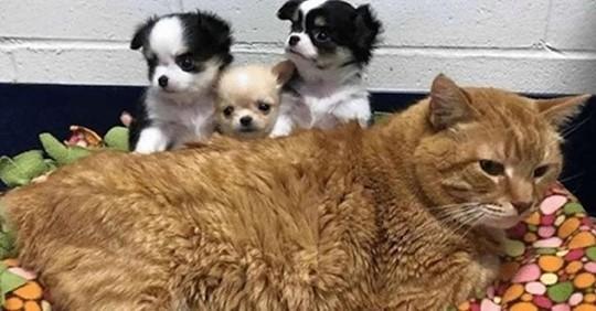 Больной рыжий кот стал сотрудником ветеринарной клиники