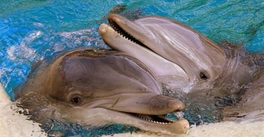 7 неприятных фактов о дельфинах, которые изменят ваше к ним отношение
