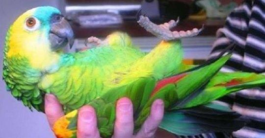 Разговаривающий попугай чуть не довел свекровь до инфаркта