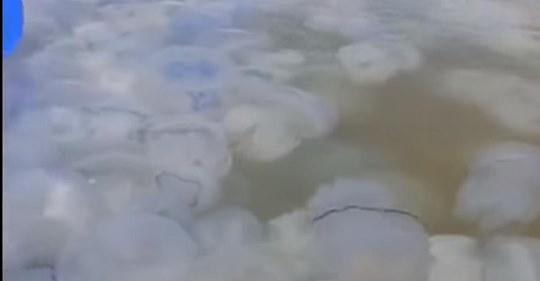 В одном из курортных городов Украины образовался «медузовый остров»