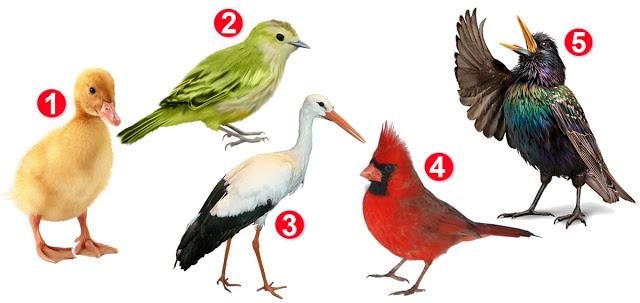 Женский психологический тест: птица, которую вы выберете, расскажет об особенностях вашего характера и отношении к жизни