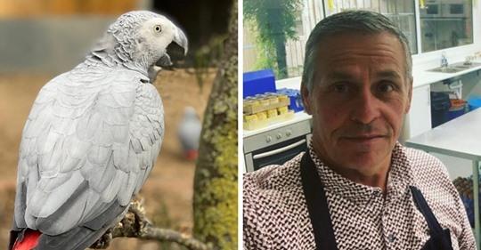 Британский зоопарк спрятал от гостей попугаев жако. Они научились материться, а потом смеялись над собой